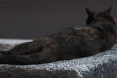 gatto-a-porta-sole-1