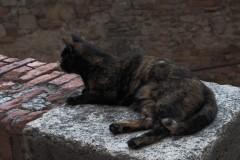 gatto-a-porta-sole-2