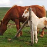 cavalli-su-monte-Subasio (1)