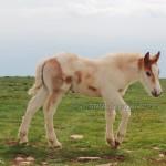cavalli-su-monte-Subasio (2)