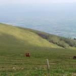 cavalli-su-monte-Subasio (3)