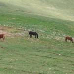 cavalli-su-monte-Subasio (4)