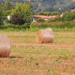 fieno-campo-Bastiola